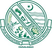 Ayub Agriculture Research Institute Jobs